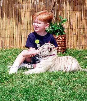 Image of Student Feeding a Baby Tiger